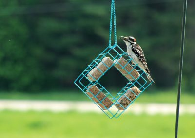 07485 Pinebush Quad Suet Cake Holder Woodpecker
