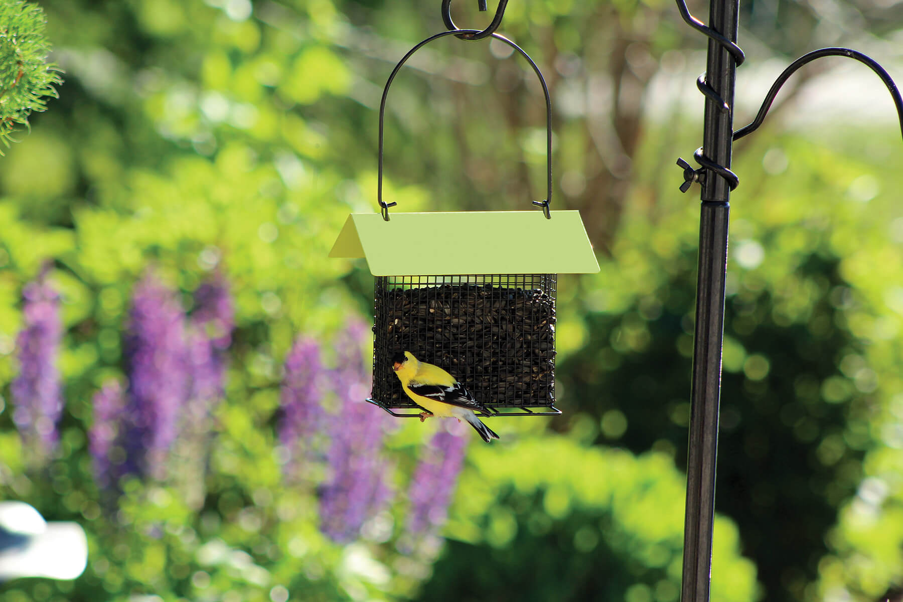 07490 Pinebush Blackoil Peanut feeder with roof Goldfinch