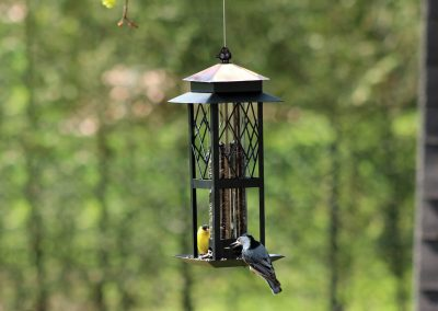 10030 Pinebush Regal Style Trellis Tube Feeder Goldfinch Nuthatch