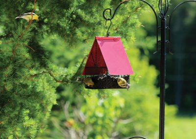 10042 Pinebush Chalet Style House Feeder Goldfinch