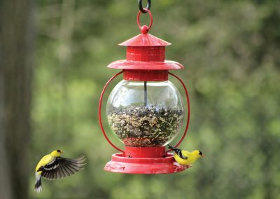 10055 Pinebush Red Lantern Seed Feeder Goldfinch