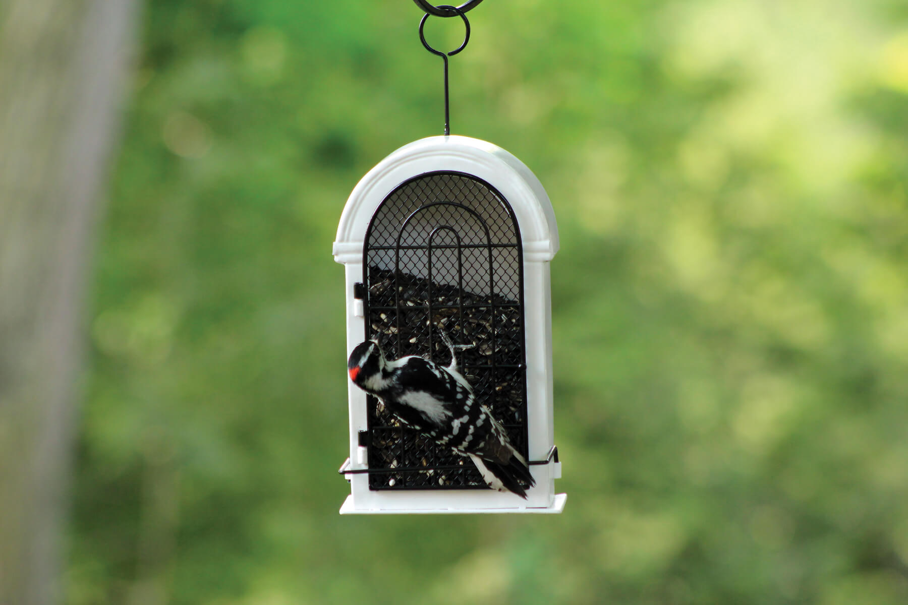 10062 Pinebush Romanesque Window Frame Style Woodpecker