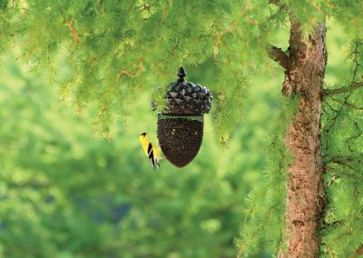 10072 Pinebush Acorn Shape Blackoil Sunflower Feeder Goldfinch
