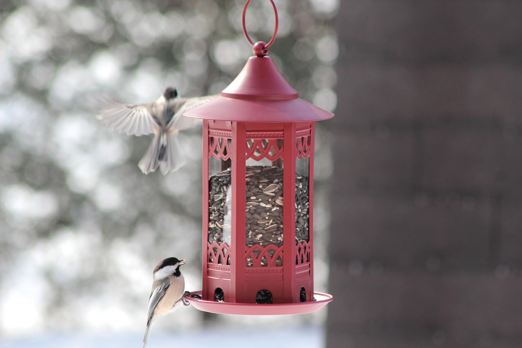 10081 Pinebush Decorative Seed Feeder Chickadee