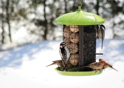10110 Pinebush Dome Roof Triple Compartment Feeder Woodpecker Finch Chickadee