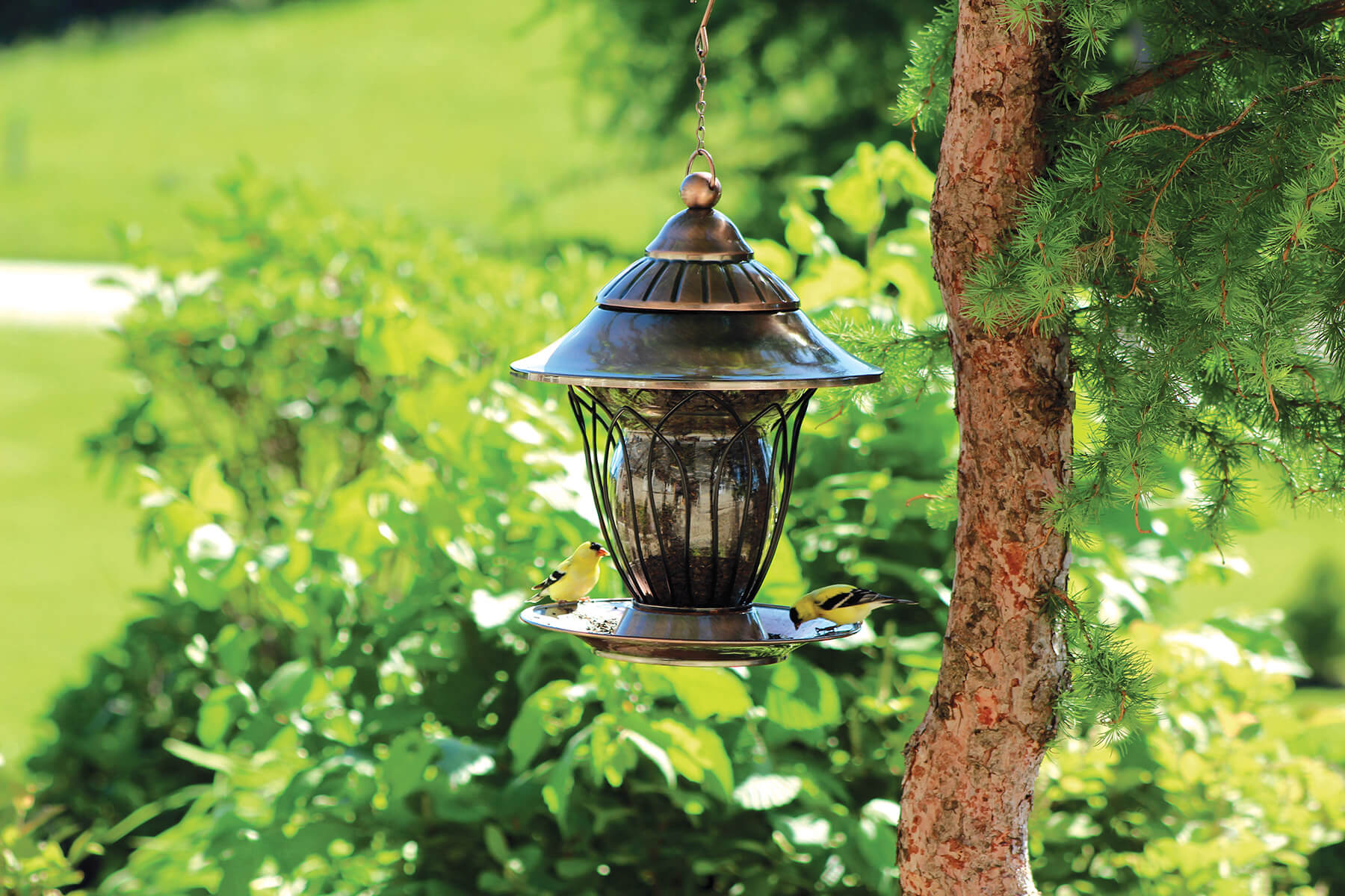 10240 Pinebush Backyard Trellis Glass Seed Feeder Goldfinch