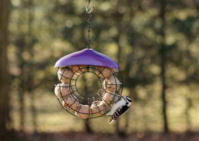 10350 Pinebush Doughnut Suet Ball Feeder Woodpecker