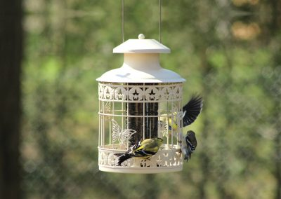 10380 Pinebush Decorative Squirrel Resistant Feeder Finch
