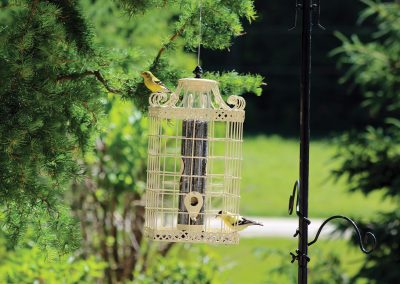 10382 Pinebush Square Decorative Squirrel Resistant Seed Feeder Finch
