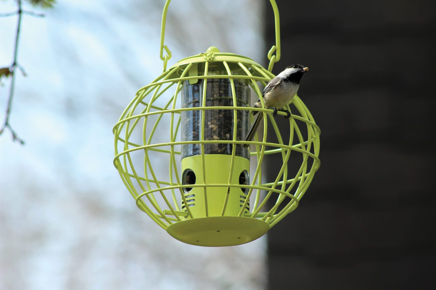 10383 Pinebush Globe Mixed Seed Feeder Squirrel Resistant Chickadee