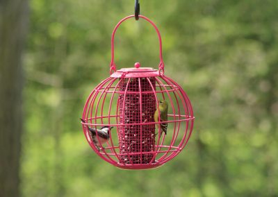 10384 Pinebush Globe Blackoil Peanut Feeder Squirrel Resistant Finch Chickadee
