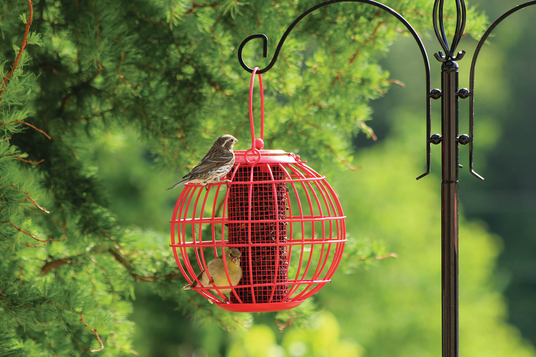 10384 Pinebush Globe Blackoil Peanut Feeder Squirrel Resistant Finch Grosbeak