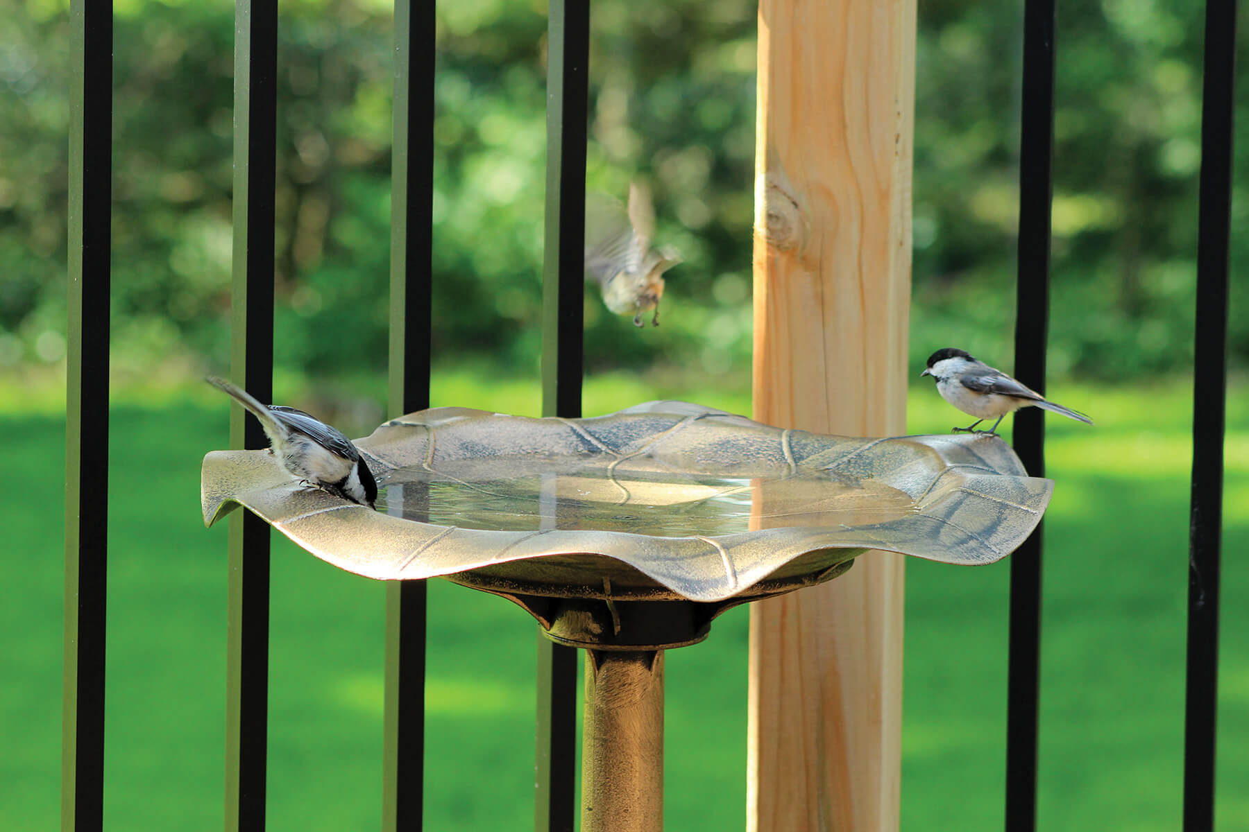 10426 Pinebush Antique Gold Birdbath Chickadee