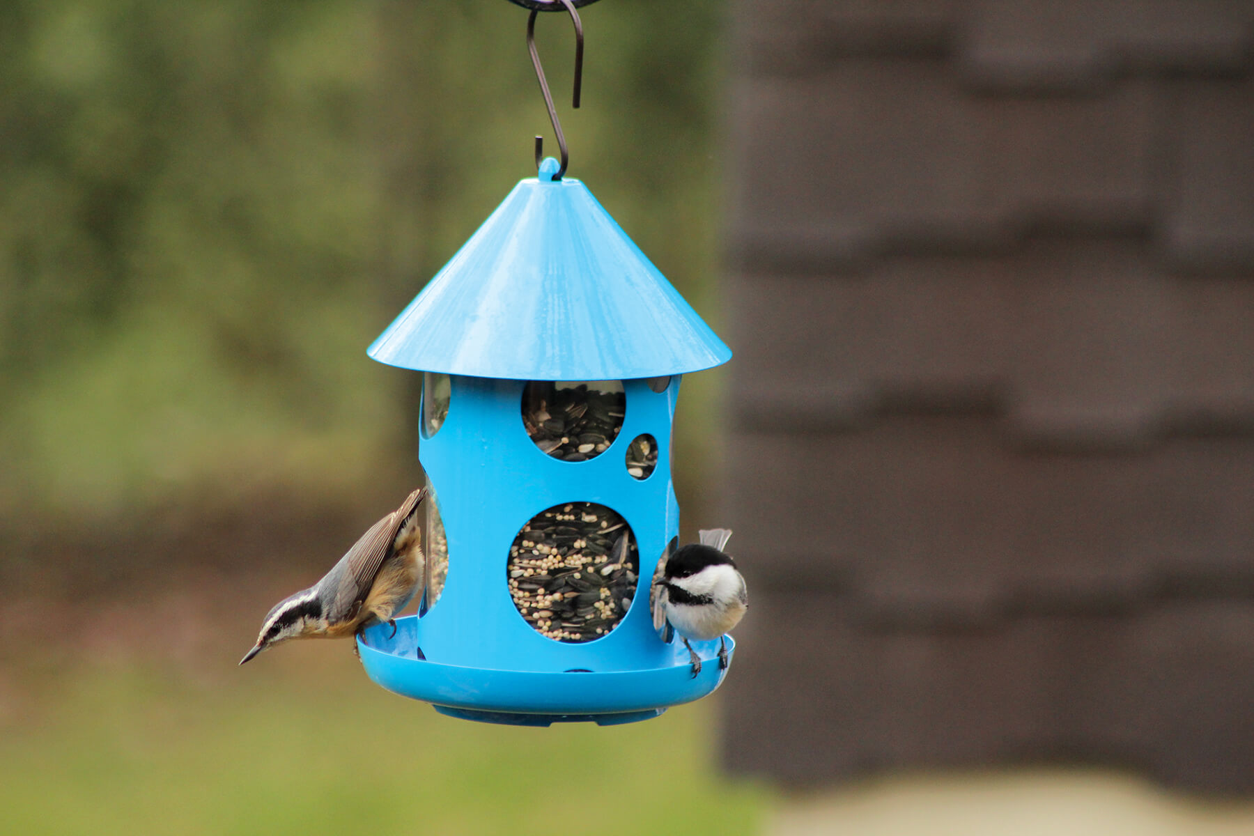 10480 Pinebush Polka Dot Birdfeeder Blue Chickadee Nuthatch