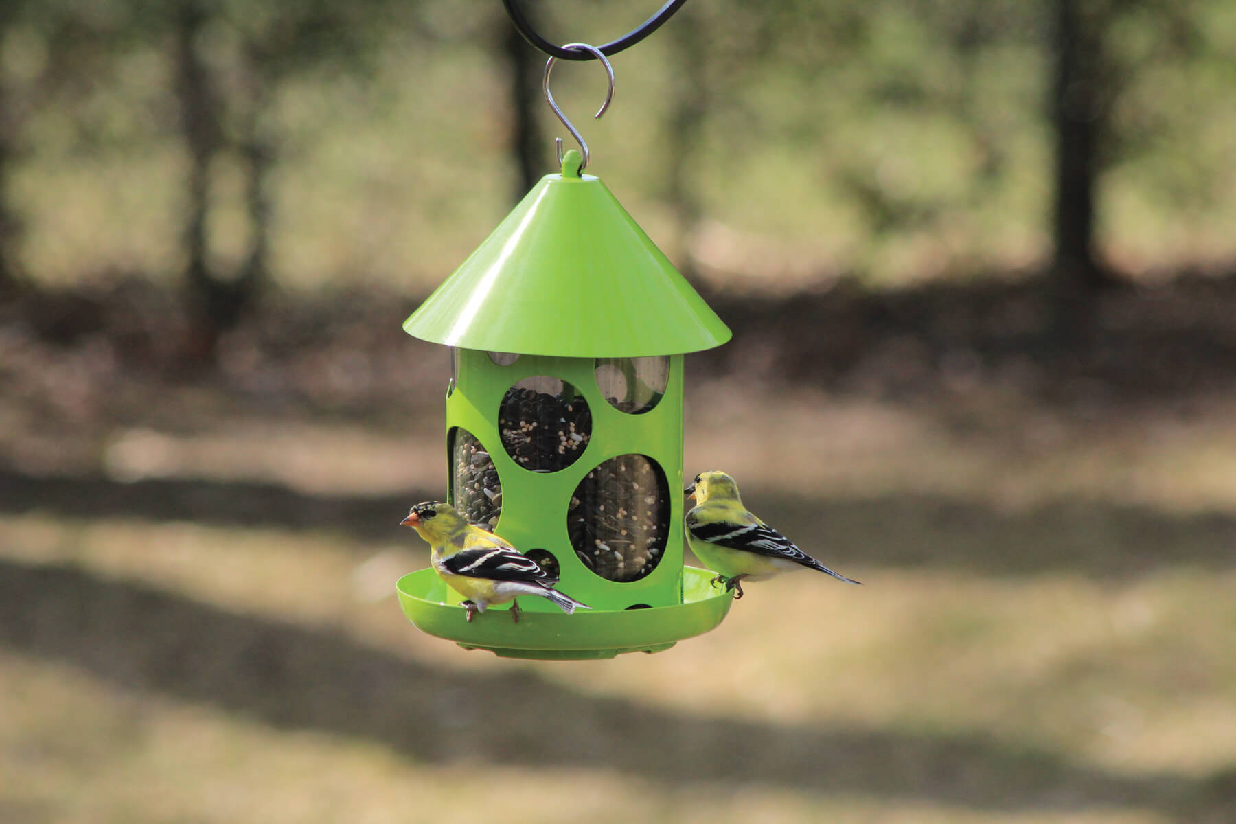 10480 Pinebush Polka Dot Birdfeeder Green Goldfinch