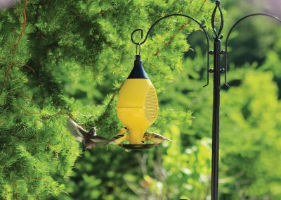 10486 Pinebush Raindrop Finch Feeder Finch Grosbeak