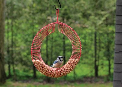10745 Pinebush Jumbo Wreath Peanut Feeder Blue Jay