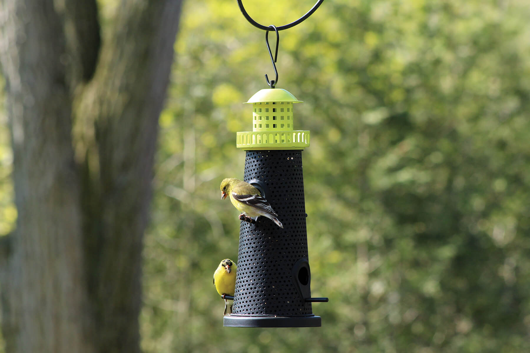 10754 Pinebush Mixed Seed Lighthouse Feeder Green Goldfinch