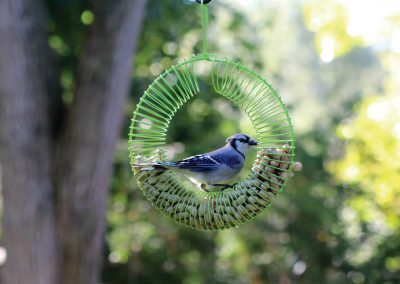 10765 Pinebush Green Wreath Peanut Feeder Blue Jay