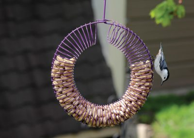10765 Pinebush Purple Wreath Peanut Feeder Nuthatch
