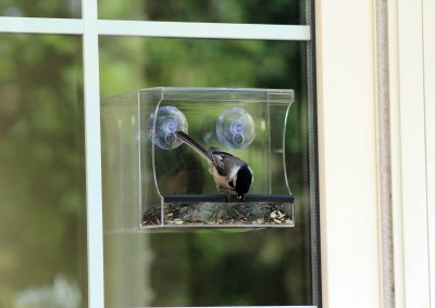 10772 Pinebush Open Trough Window Feeder Chickadee