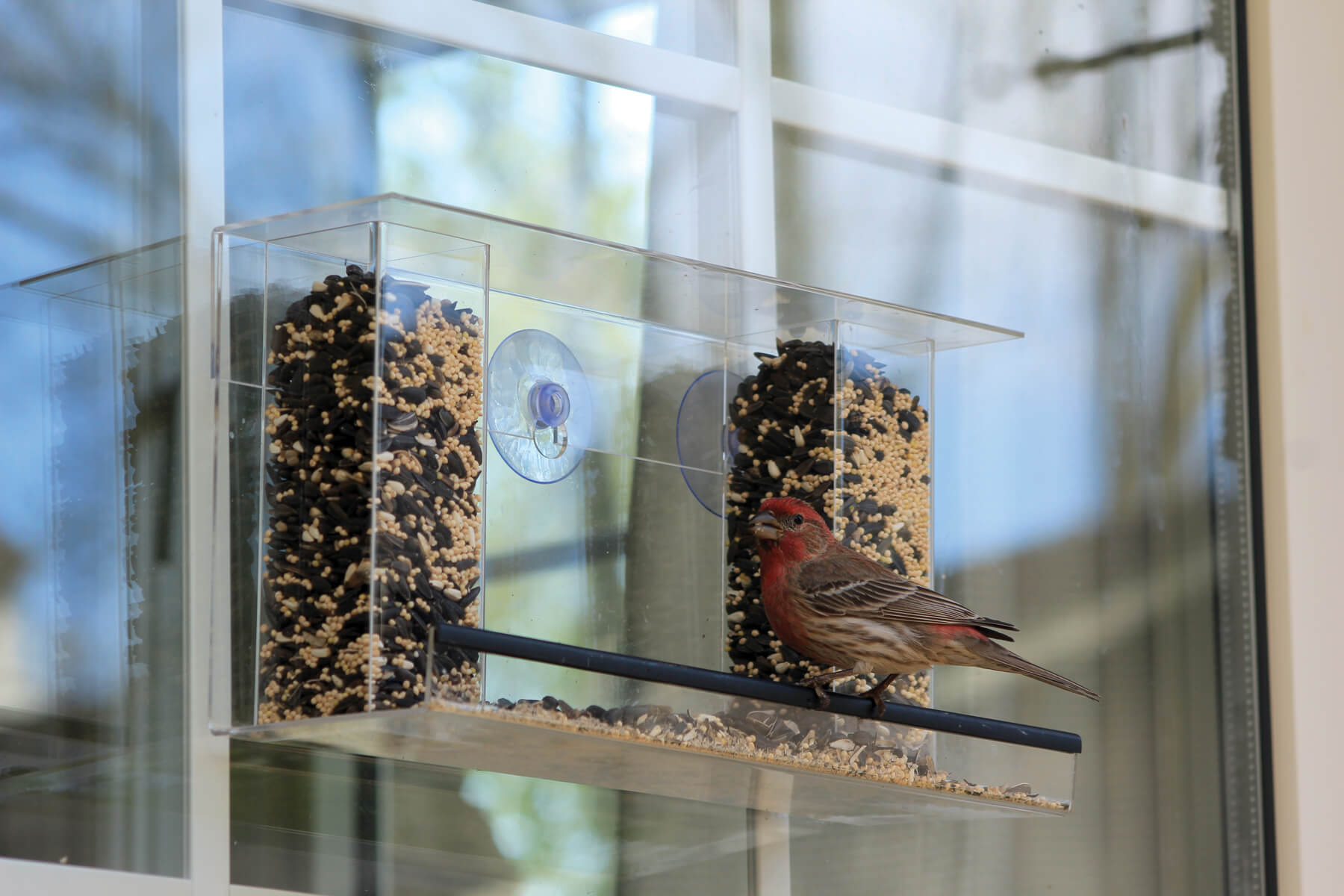 10776 Pinebush Double Tower Window Feeder Finch