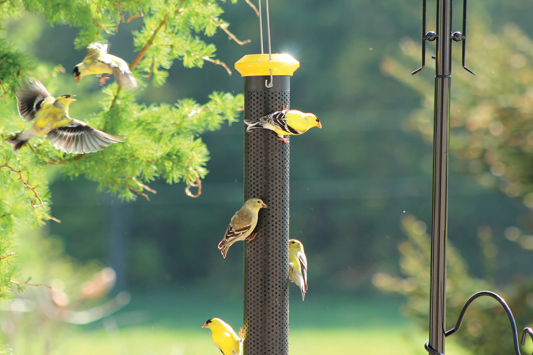 10826 Pinebush Wingfield Finch Feeder