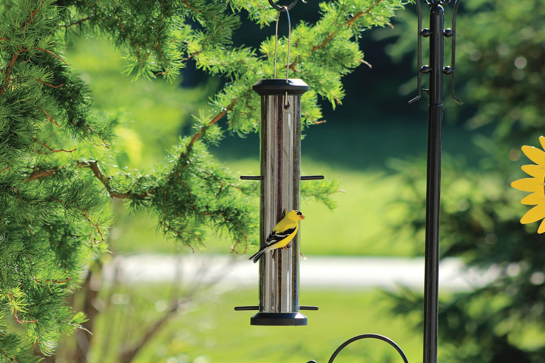10861 Pinebush Wingfield Finch Feeder Poly