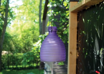 18009 Pinebush Purple Wasp Catcher