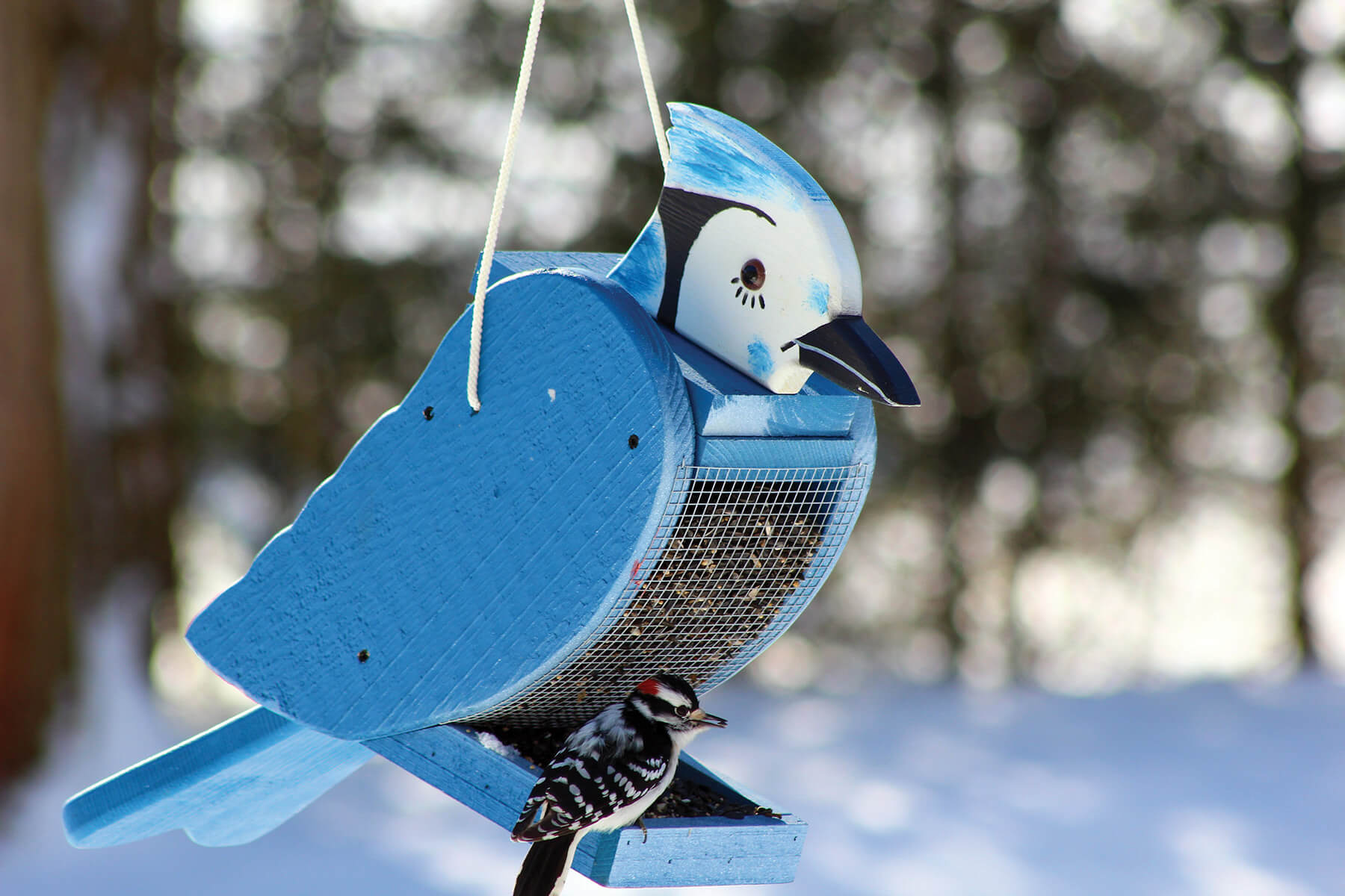 78002 Pinebush Blue Jay Shape Wood Feeder Woodpecker 1