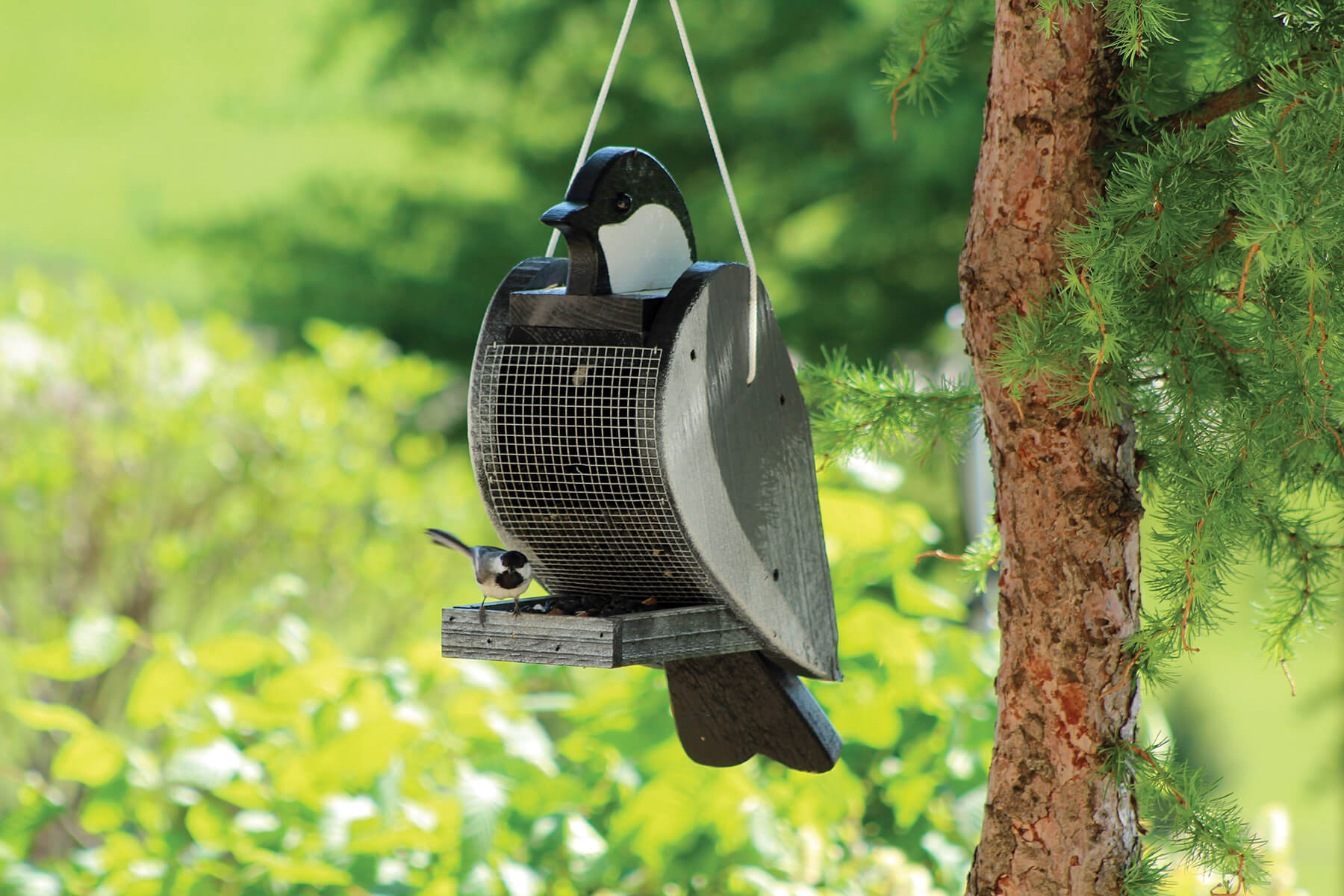 78005 Pinebush Chickadee Shape Wood Feeder