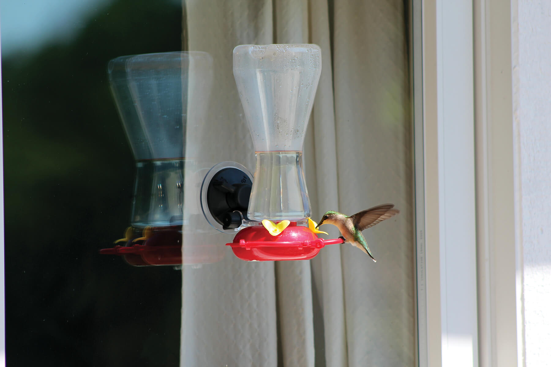 88012 Pinebush Window Hummingbird Feeder