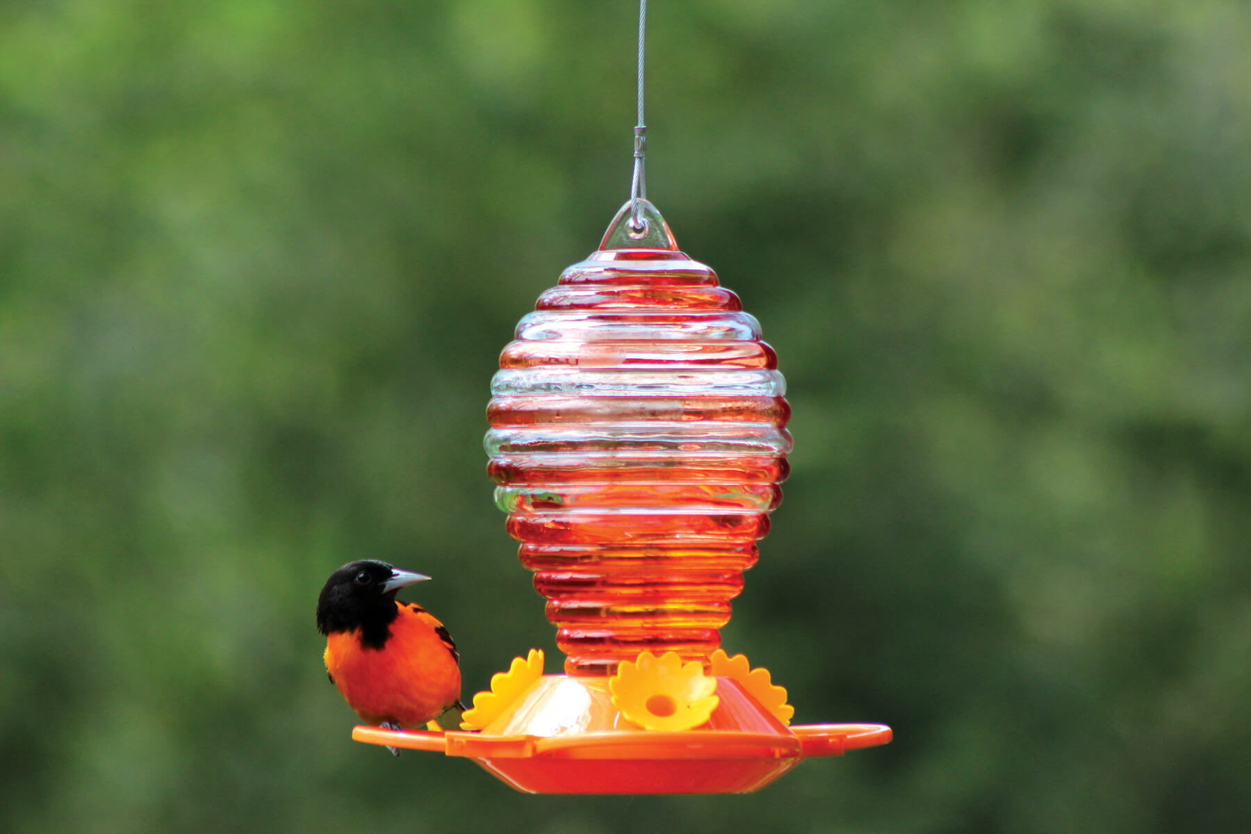 88042 Pinebush Handpainted Rings Glass Oriole Feeder
