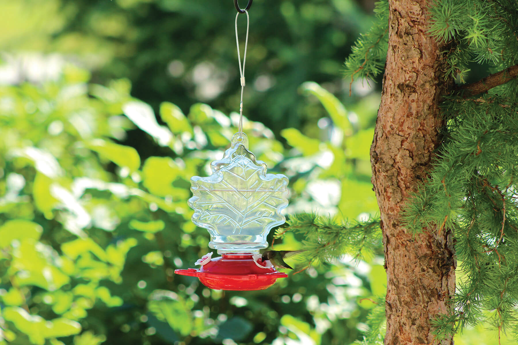 88055 Pinebush Maple Leaf Shape Glass Hummingbird Feeder