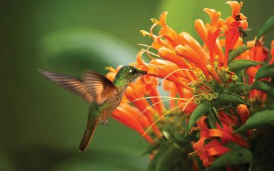 7 things you should know about hummingbirds